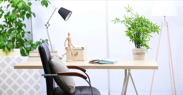 despacho plantas
